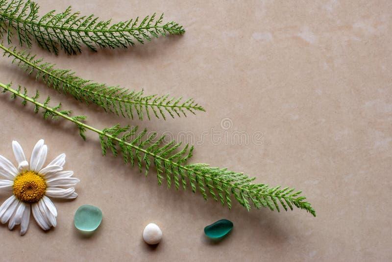 平的看法 一棵植物的三根绿色小树枝有春黄菊和石头的 免版税库存照片