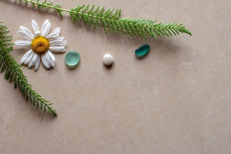 平的看法 两个分支以圣诞树的形式和在他们之间一块雏菊和绿色玻璃与白色小卵石 库存照片
