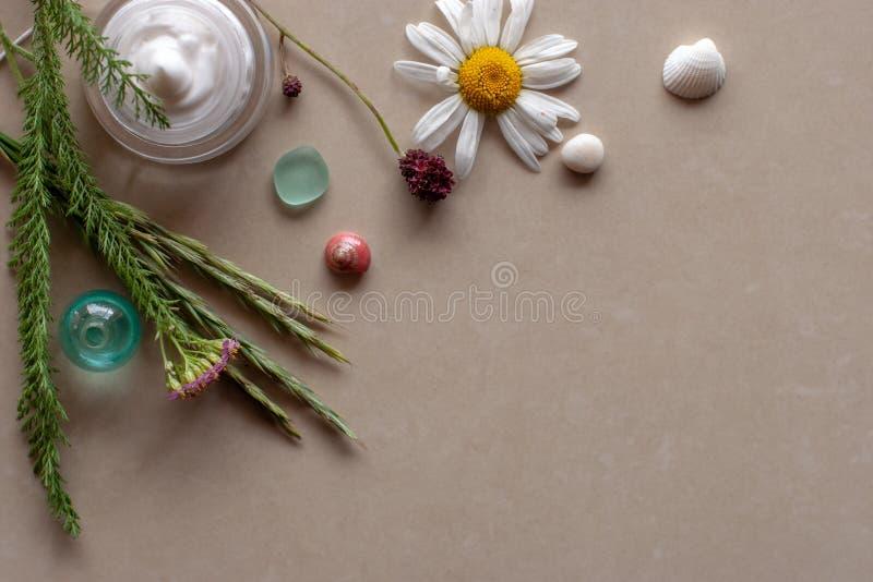 平的看法 植物、花、壳和奶油小树枝在瓶子 免版税库存图片