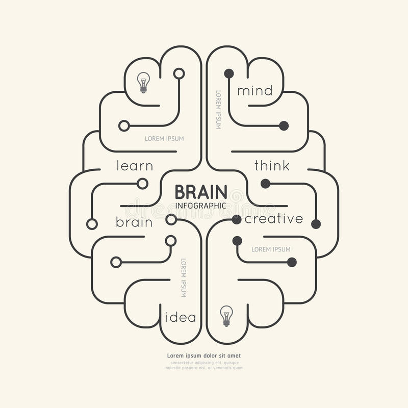 平的线性Infographic教育概述脑子概念 向量 皇族释放例证