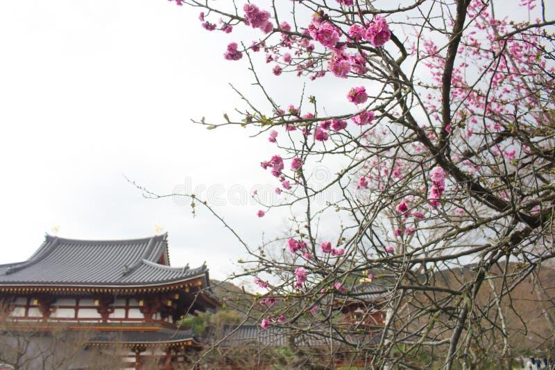 平等院寺庙,宇治市,京都,日本 库存照片