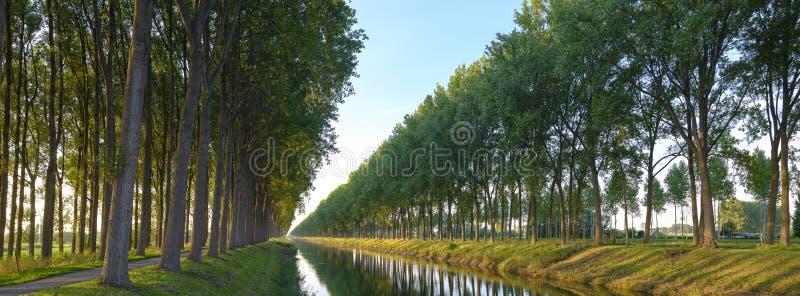 平衡在山毛榉树大道的秋天光排行Leopoldkanaal和Schipdonkkanaal的双运河-在奥斯特马勒附近 库存照片
