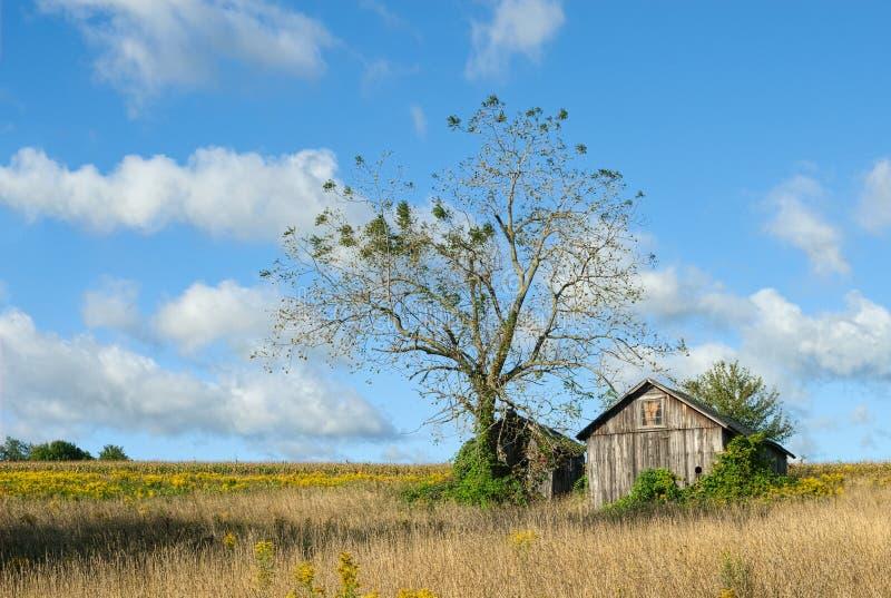平静的农村风景 库存照片