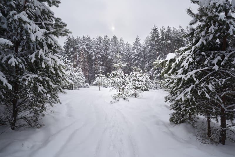 平静的冬天风景 在深雪的空的道路在具球果森林里在不高兴的天 库存照片
