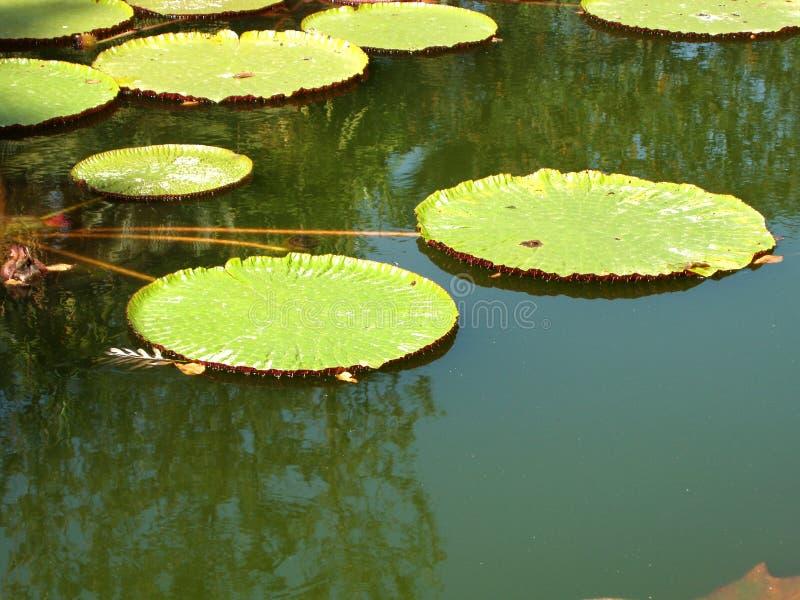平静的池塘 图库摄影