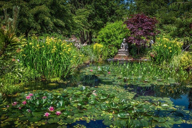 平静的池塘 库存图片