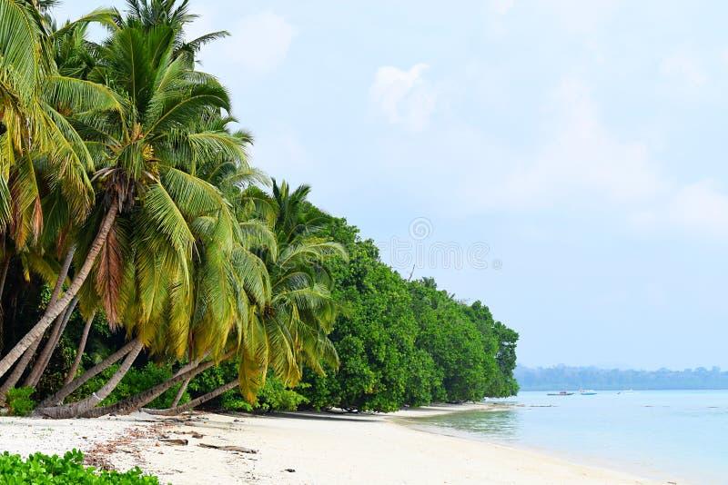 平静的海景-白色沙滩用与豪华的绿色棕榈树的天蓝色的水- Vijaynagar, Havelock,安达曼尼科巴,印度 免版税库存图片