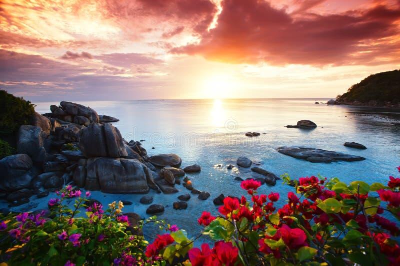 平静的海滩胜地,美丽的牵牛花 库存图片