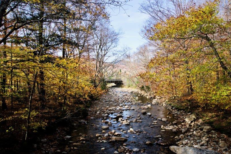 平静的秋叶 免版税库存图片