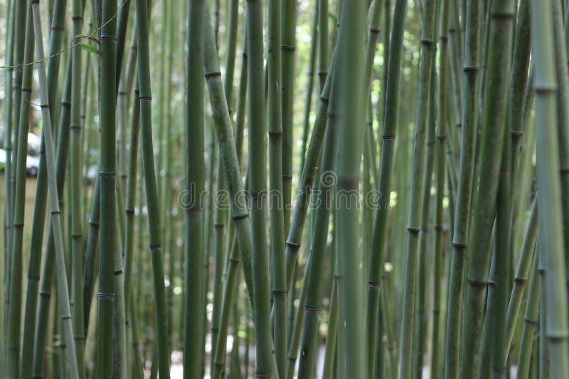 平静的竹子在日本庭院里 库存图片