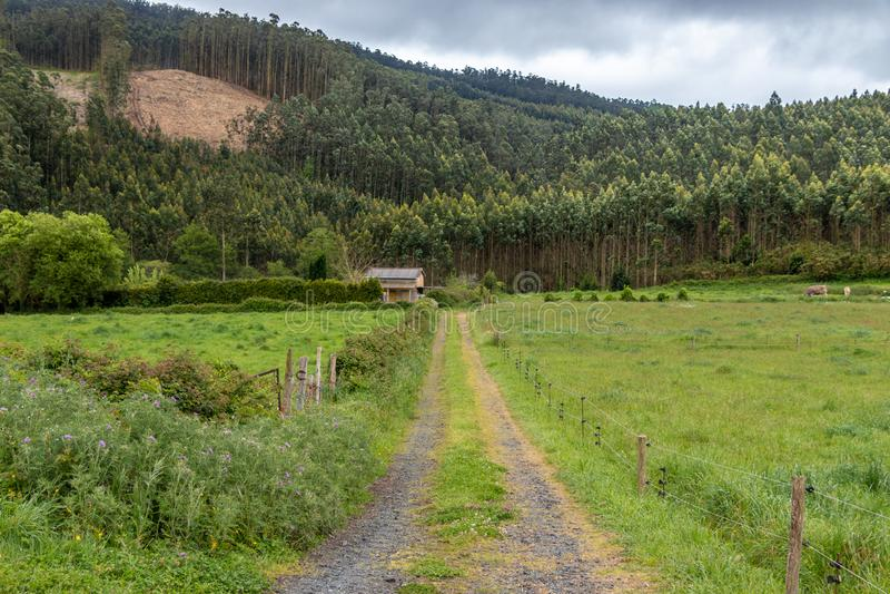 平静的道路在草和树围拢的一个农村环境里象ecualpitos在加利西亚,西班牙 免版税库存图片