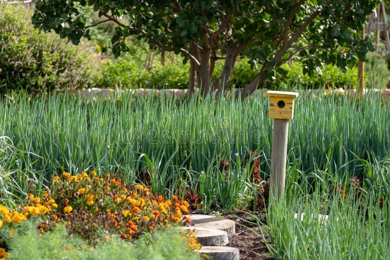 平静,储存极多的庭院和一个黄色鸟房子在道路末端在Babelstoren酒庄园,南非 库存图片
