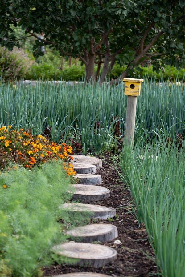 平静,储存极多的庭院,有各种各样的植物和一个黄色鸟房子的在道路末端 免版税库存照片