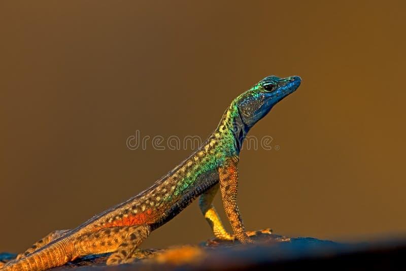 平面的蜥蜴 免版税库存照片