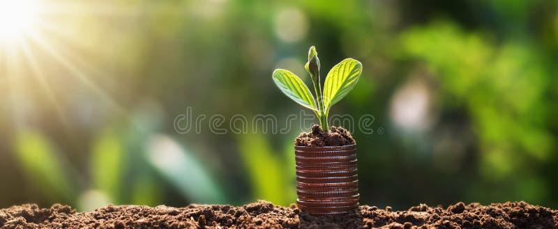 年幼植物在与日出的硬币增长 财务和会计概念 免版税库存照片