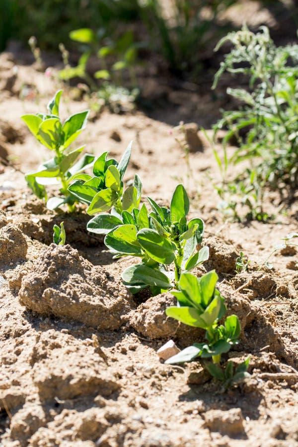 年幼植物在庭院或果树园里 库存照片