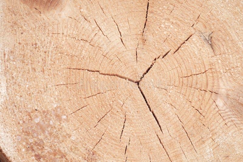 年轮和崩裂在被锯的杉木,木纹理 图库摄影