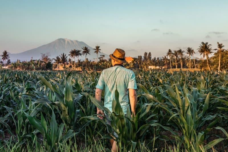 年轻人一个草帽的旅客游人在日落时间的火山背景 巴厘岛 印度尼西亚 库存照片