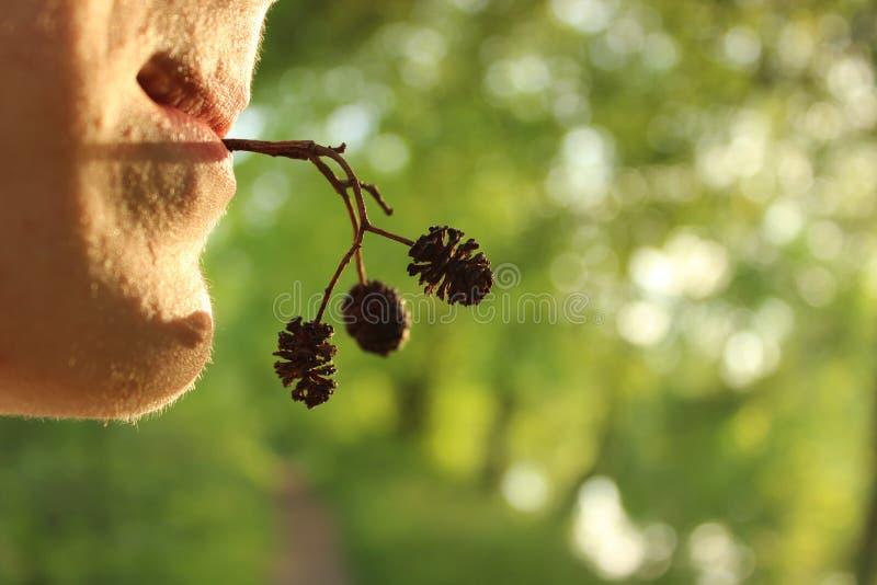 年轻人在他的嘴握一棵植物的枝杈有锥体的在明亮的绿叶背景的日落  图库摄影