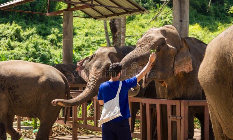 年轻人在6月喂养大象用在一个圣所的香蕉 免版税图库摄影
