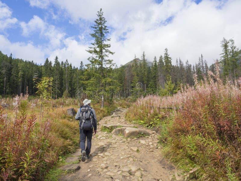年轻人旅游远足在高tatra山的美丽的自然痕迹在斯洛伐克,晚夏好日子 免版税库存图片