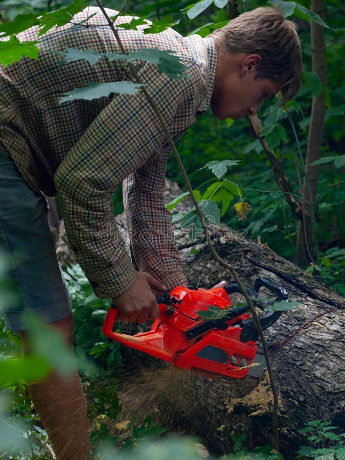 年轻人锯与树桩锯,木柴为冬天做准备,人削减树岗位 免版税库存照片