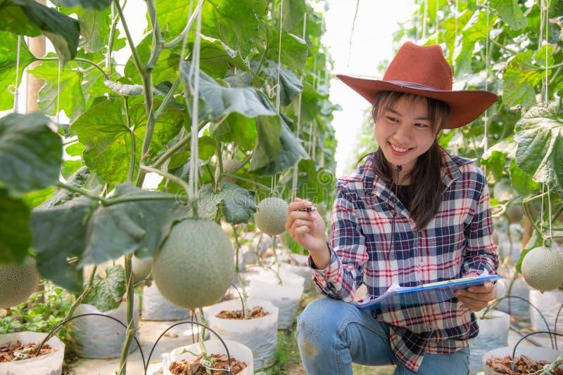 年轻农夫分析瓜作用成长对温室农场的,使用一种片剂的农艺师在农业领域 库存照片