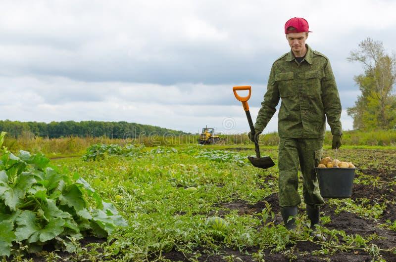 年轻农夫运载一个桶土豆 免版税库存图片