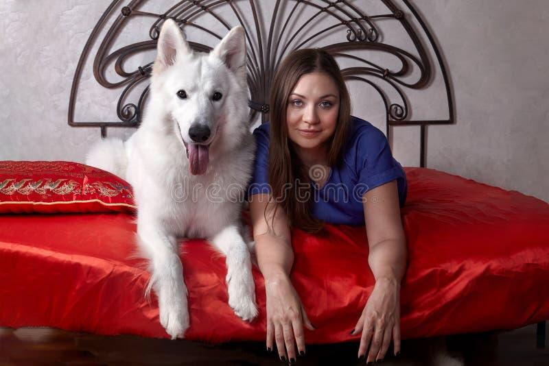 年轻可爱的白种人妇女说谎与大瑞士牧羊人品种传神狗在红色被盖的床上的 美丽的女性和sno 库存照片