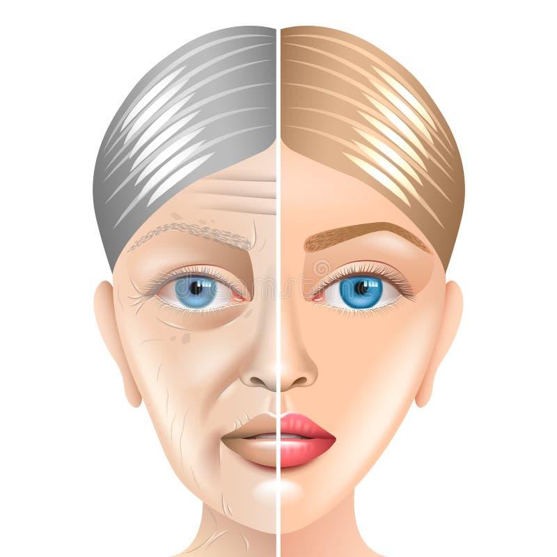年轻和老妇人面孔在白色传染媒介隔绝的老化概念 皇族释放例证