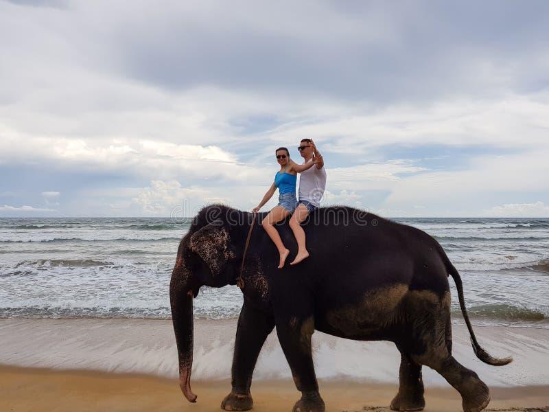 年轻夫妇在一个热带海洋海滩的背景的一头大象乘坐 库存照片
