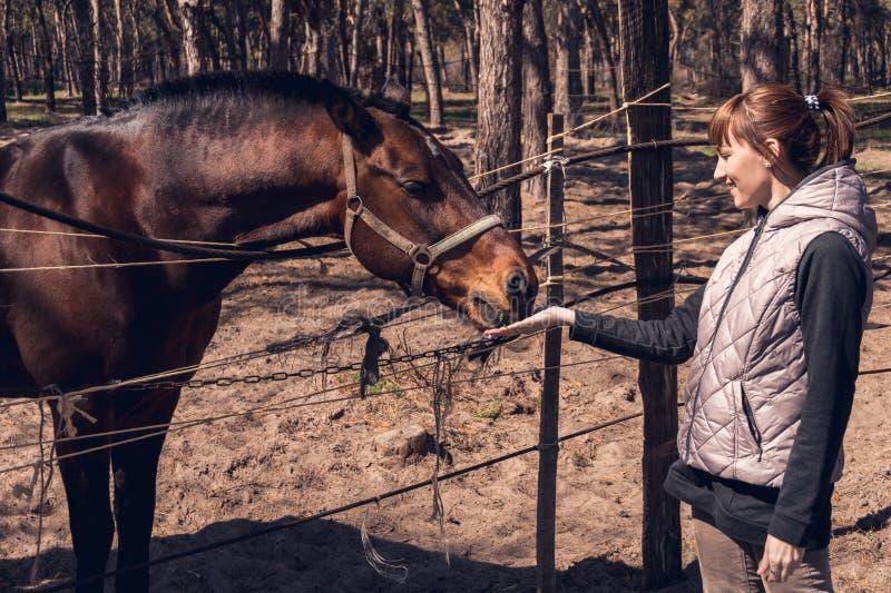 年轻女人和美好的棕色马身分在篱芭后 免版税库存照片