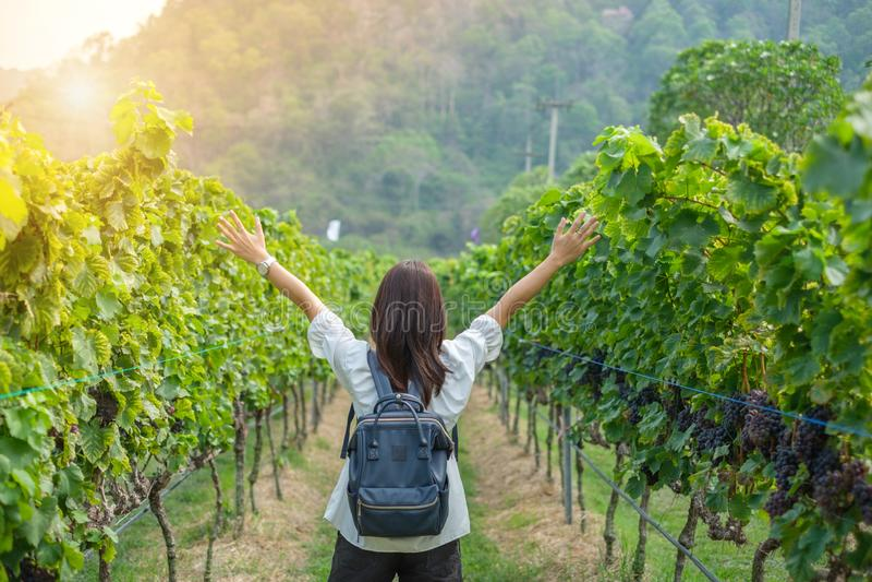 年轻女人旅行的背包徒步旅行者,亚洲旅客身分在美丽的葡萄园里在秋天 库存图片