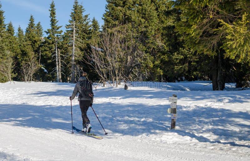 年轻女人移动速度滑雪在捷克晴朗的冬日 从后面的看法 免版税库存照片