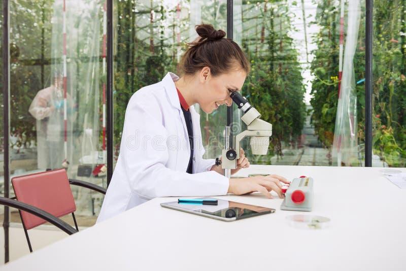 年轻女性研究员审查的叶子在实验室的显微镜下 免版税图库摄影