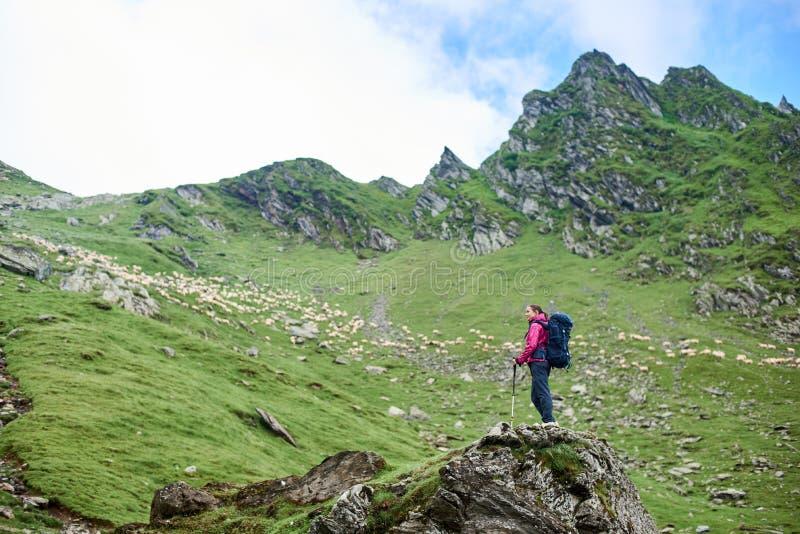 年轻女性绿色落矶山脉和草甸和走绵羊登山人赞赏的秀丽在罗马尼亚 免版税库存照片