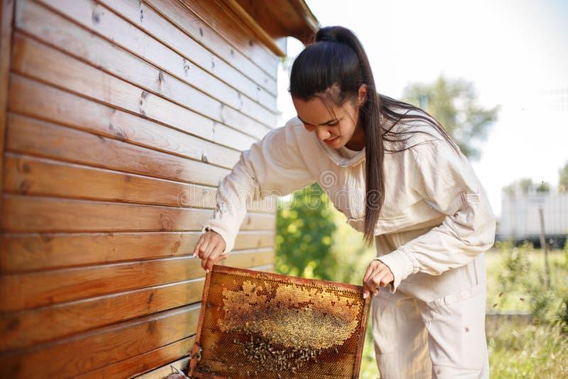 年轻女性蜂农从蜂房拔出与蜂窝的一个木制框架 收集蜂蜜 养蜂业概念 库存照片
