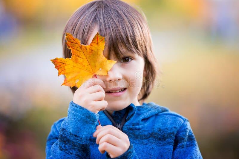年轻学龄前男孩美丽的秋天画象在公园 免版税库存图片