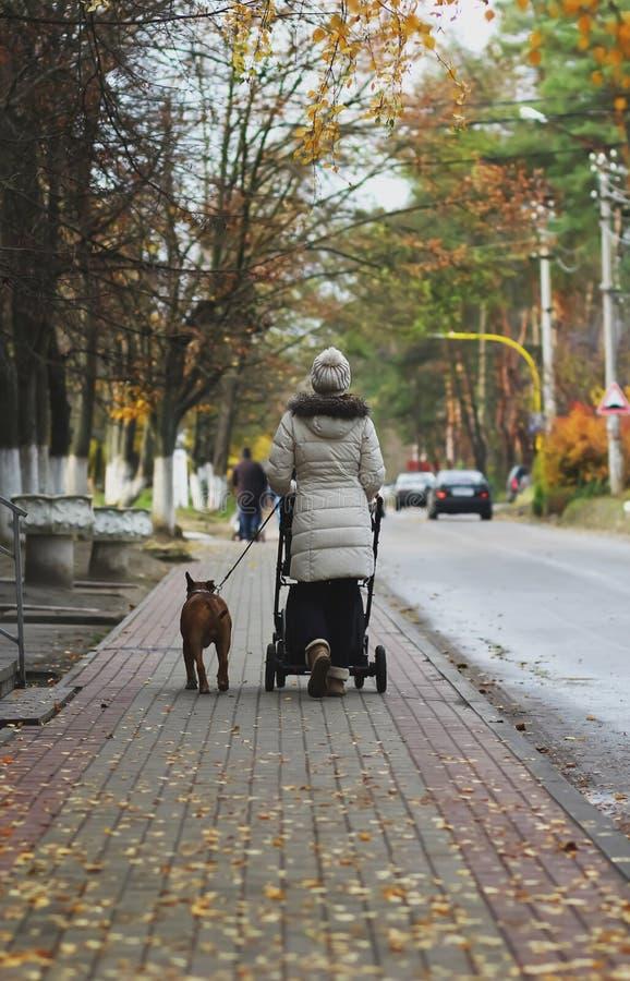 年轻母亲walkingin有婴儿推车和杂种犬狗的,背面图街道 延迟秋天 免版税库存照片