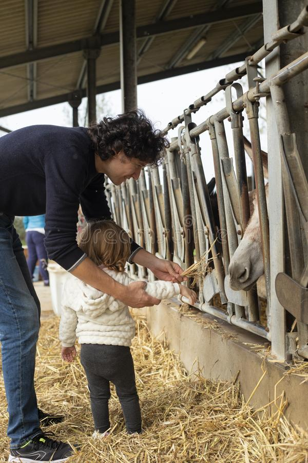 年轻爸爸和小喂养一头驴的女婴在农场 免版税图库摄影