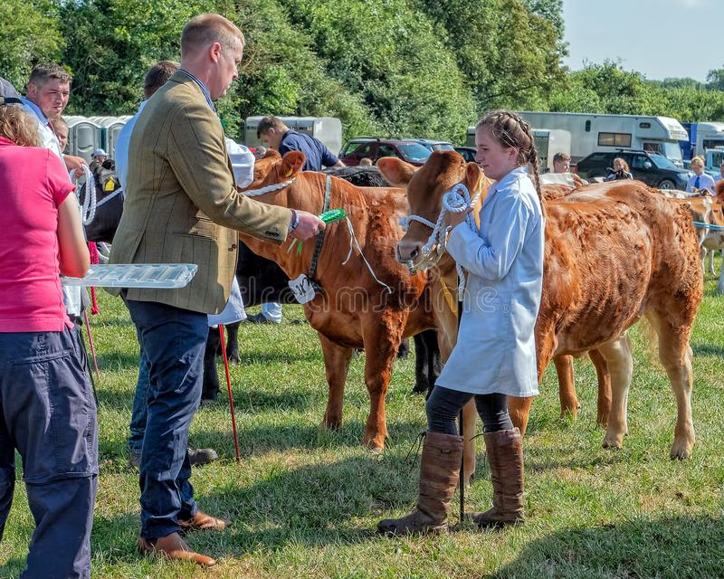 年轻牛经理奖, Hanbury乡下展示,渥斯特夏,英国 免版税库存图片