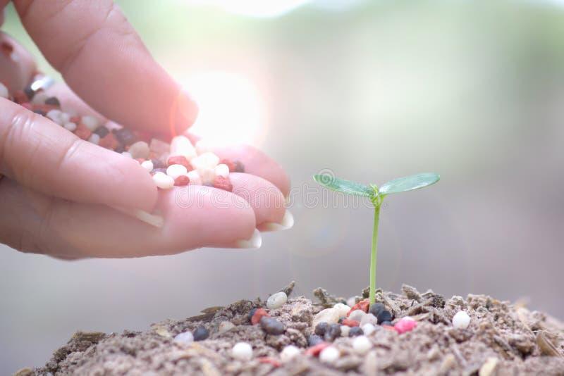 年轻生长在绿色叶子顶部的人浇灌的幼木的手弄脏了背景 企业成长概念 库存图片