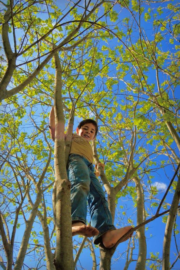 年轻男孩高在树 免版税库存图片