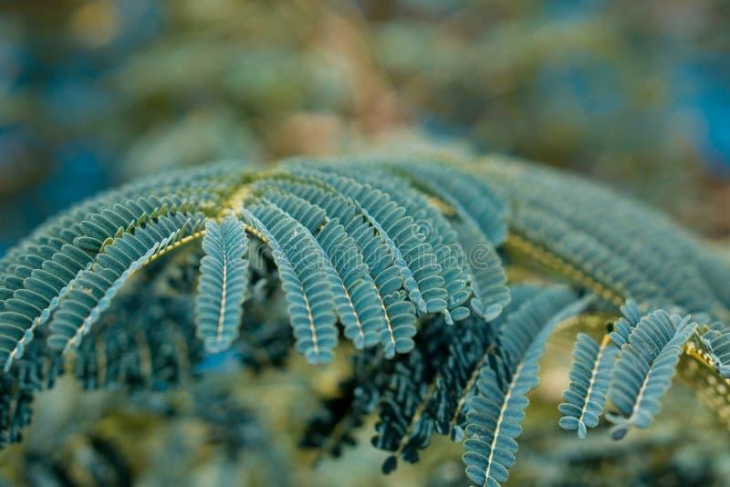 年轻绿色树枝森林 免版税库存照片