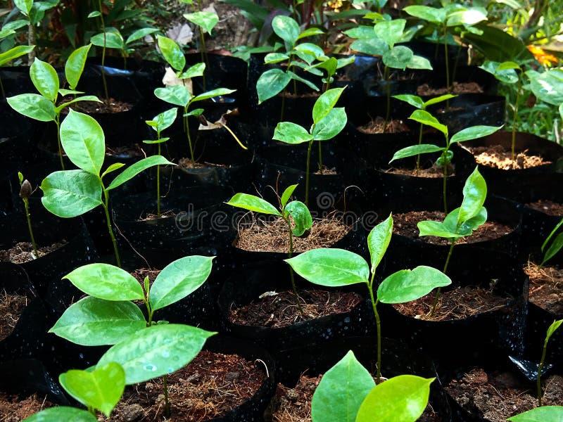年轻绿色植物发芽 库存照片