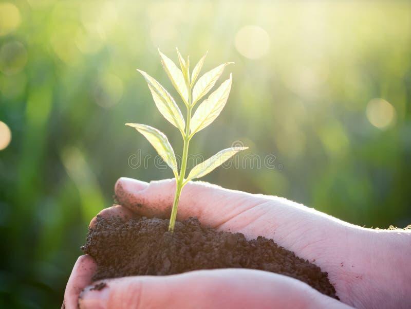 年轻绿色植物在手上 新的生活 概念许多生态的图象我的投资组合 免版税库存图片