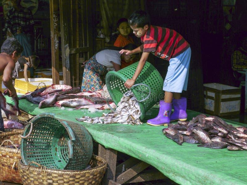 年轻缅甸鱼卖主在曼德勒鱼市,缅甸上 库存图片