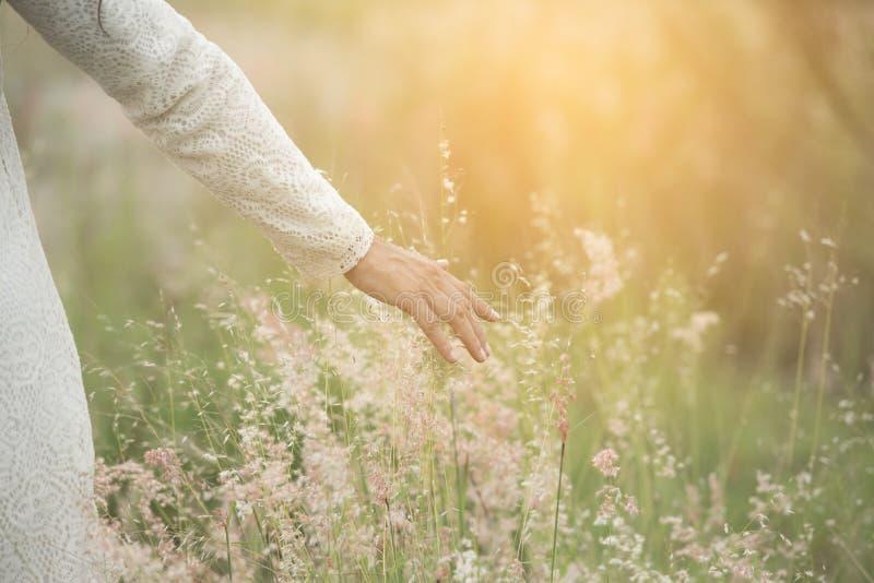年轻美丽的妇女感人的麦子钉的被弄脏的手用她的在日落的手 免版税库存图片