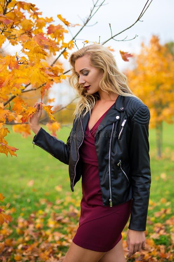 年轻美丽的白肤金发的妇女画象在秋天公园 库存图片