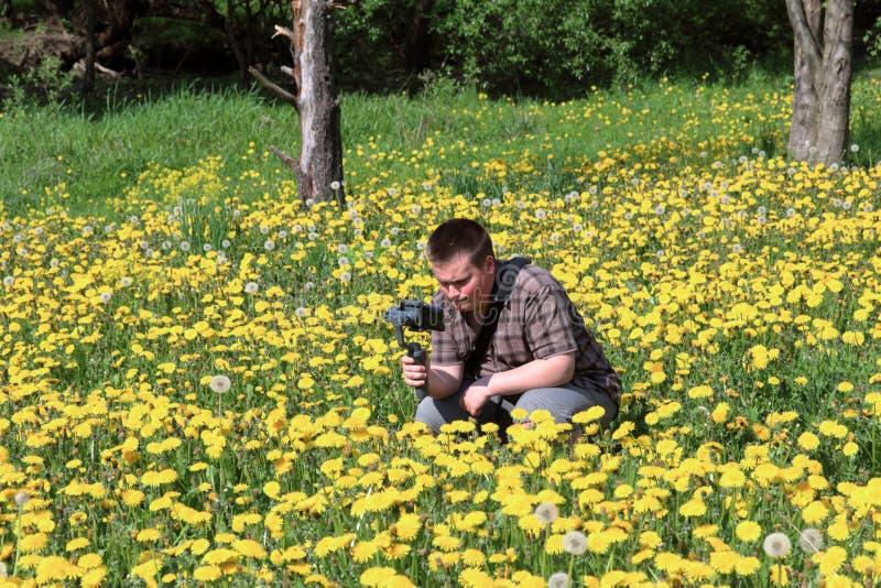 年轻肥满人在一个草甸用开花的蒲公英 举办在常平架安装的智能手机的录像 蹲下  免版税库存图片